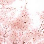 秋田県の桜の名所、基本情報と地図や宿・温泉地情報まとめ