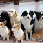 犬を飼う心構えと病気から守るには?サプリメントは必要?