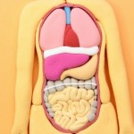 大腸がんに20代がなる確率と原因とは?20代がなる大腸癌の特徴は?
