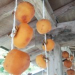 干し柿のカビ対策とは?カビが生えてしまった場合はどうする?